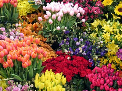 Franquia de floricultura